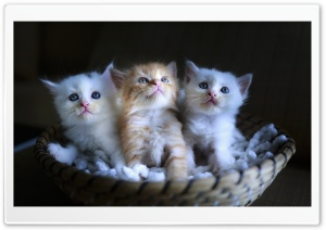Three Adorable Kittens in a...