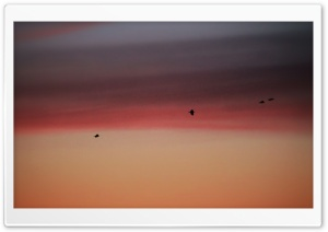 Birds in Burning Sky
