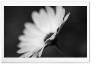 Flower Monochrome