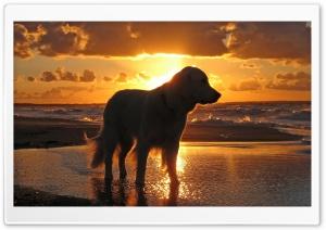 Retriever In The Sunset