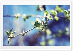 Pear Tree Twigs, Bokeh