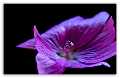Download Purple Flower UltraHD Wallpaper
