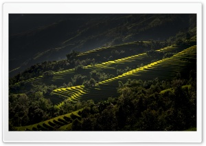 Rice Terraces Vietnam