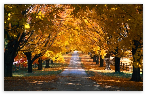 Download Autumn Trees Along The Road UltraHD Wallpaper