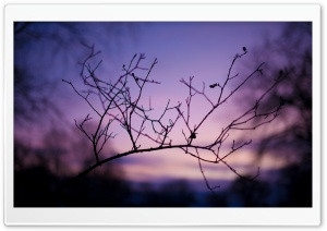 Branch Silhouette At Sunset