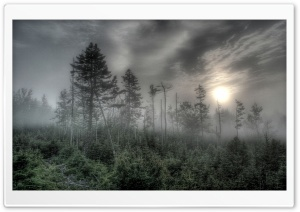 Foggy Forest HDR