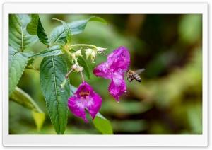 Honeybee approach