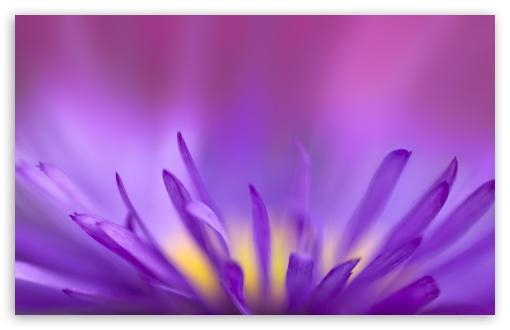 Download Delicate Purple Petals UltraHD Wallpaper