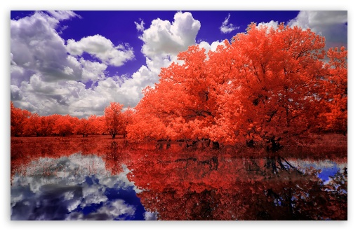 Download A Red Day UltraHD Wallpaper