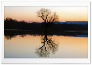 Tree Reflection In The...