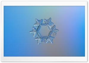 Snowflake Microscope Slides