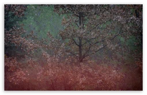 Download Fading Colors UltraHD Wallpaper