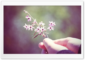 Small Flowers Twig
