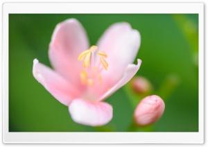 Light Pink Flower, Green...