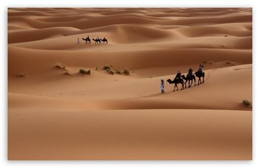 Download Camels Tour UltraHD Wallpaper