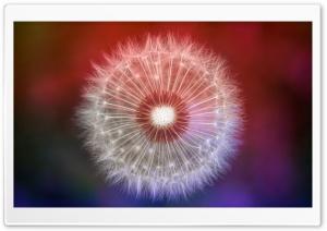 Colorful Dandelion Seeds Macro
