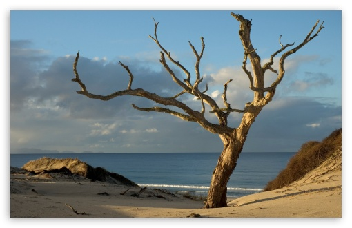 Download Dry Tree On The Beach UltraHD Wallpaper