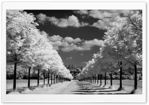 Trees Along The Road Black...