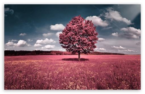 Download Pink Field UltraHD Wallpaper