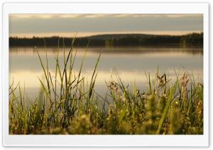 Midsummer in Lapland