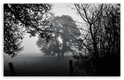 Download Morning Tree UltraHD Wallpaper