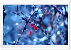 Frozen Fruits 1