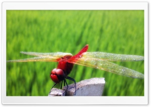 Red Dragonfly Part 2