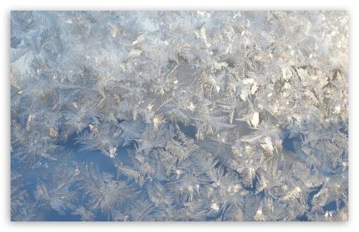 Download Ice Flowers On A Window UltraHD Wallpaper