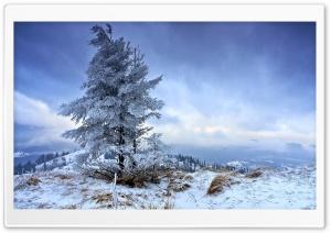 Solitary Fir Tree, Winter