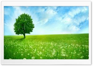 White Dandelion Field