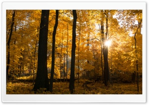 Fall Colors Sunrise, Forest