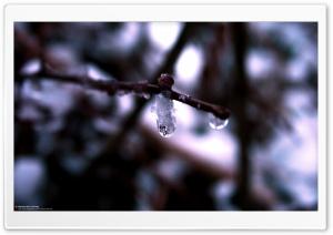 Cold Drops (Precious But...