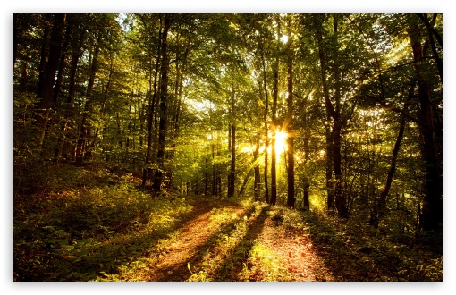 Download Forest In Late Afternoon UltraHD Wallpaper