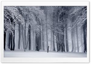 Snowy Forest, Winter
