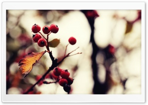 Berries And Twigs