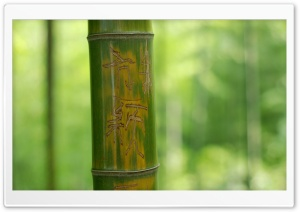 Feng Shui Bamboo Stick