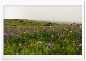 Meadow In Full Flower