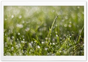 Wet Grass Bokeh