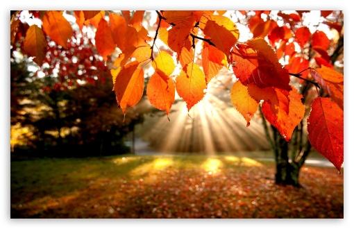 Download Autumn Landscape UltraHD Wallpaper