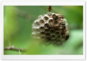 Wasp Hives