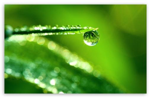 Download Water Drop Reflection, Macro UltraHD Wallpaper