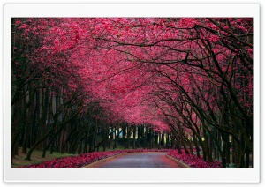 Blooming Trees Alley