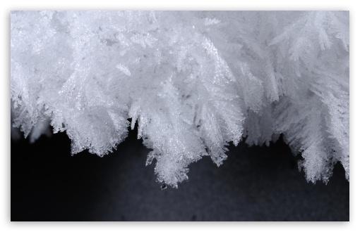 Download Ice Flowers UltraHD Wallpaper