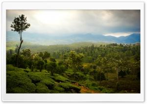 Tea Mountains