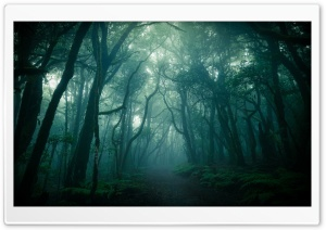 Dark Woods, Fog