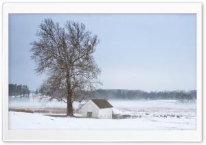 Mist, Tree, House, Winter