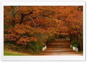 Autumn Scenes 19