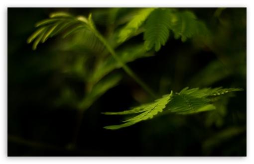 Download Green Leaves Macro UltraHD Wallpaper