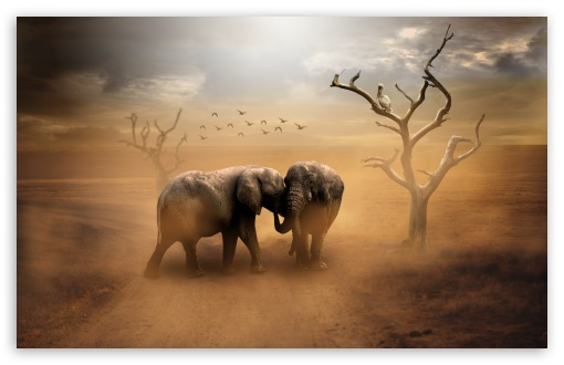 Download Two Elephants, Wild Animals, Dust UltraHD Wallpaper
