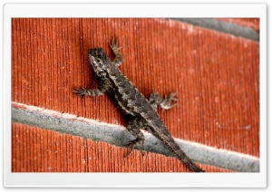 Lizard on Brick Wall